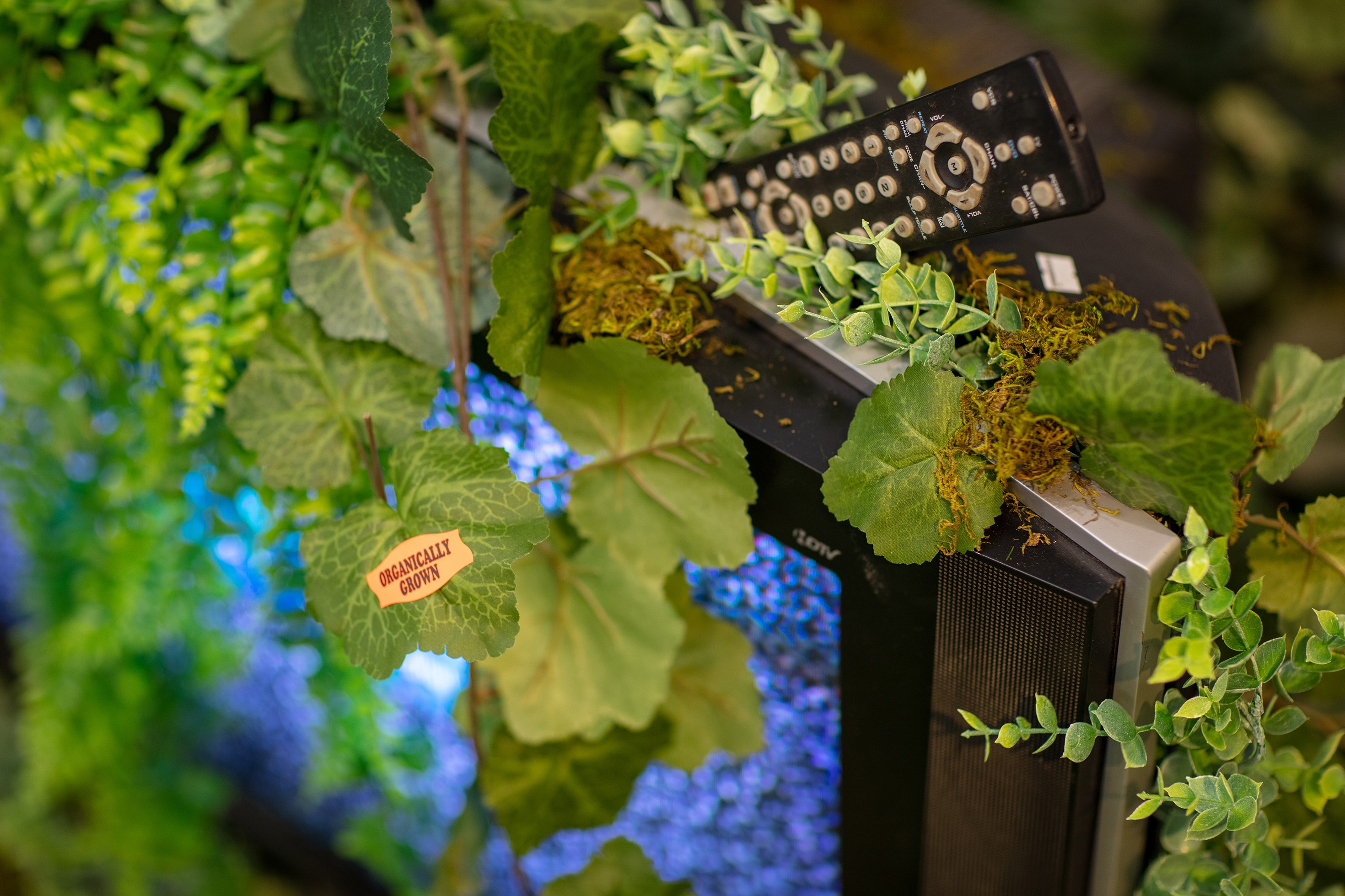 """""""Organically grown"""" artificial ivy growing out of a more modern """"HDTV""""."""