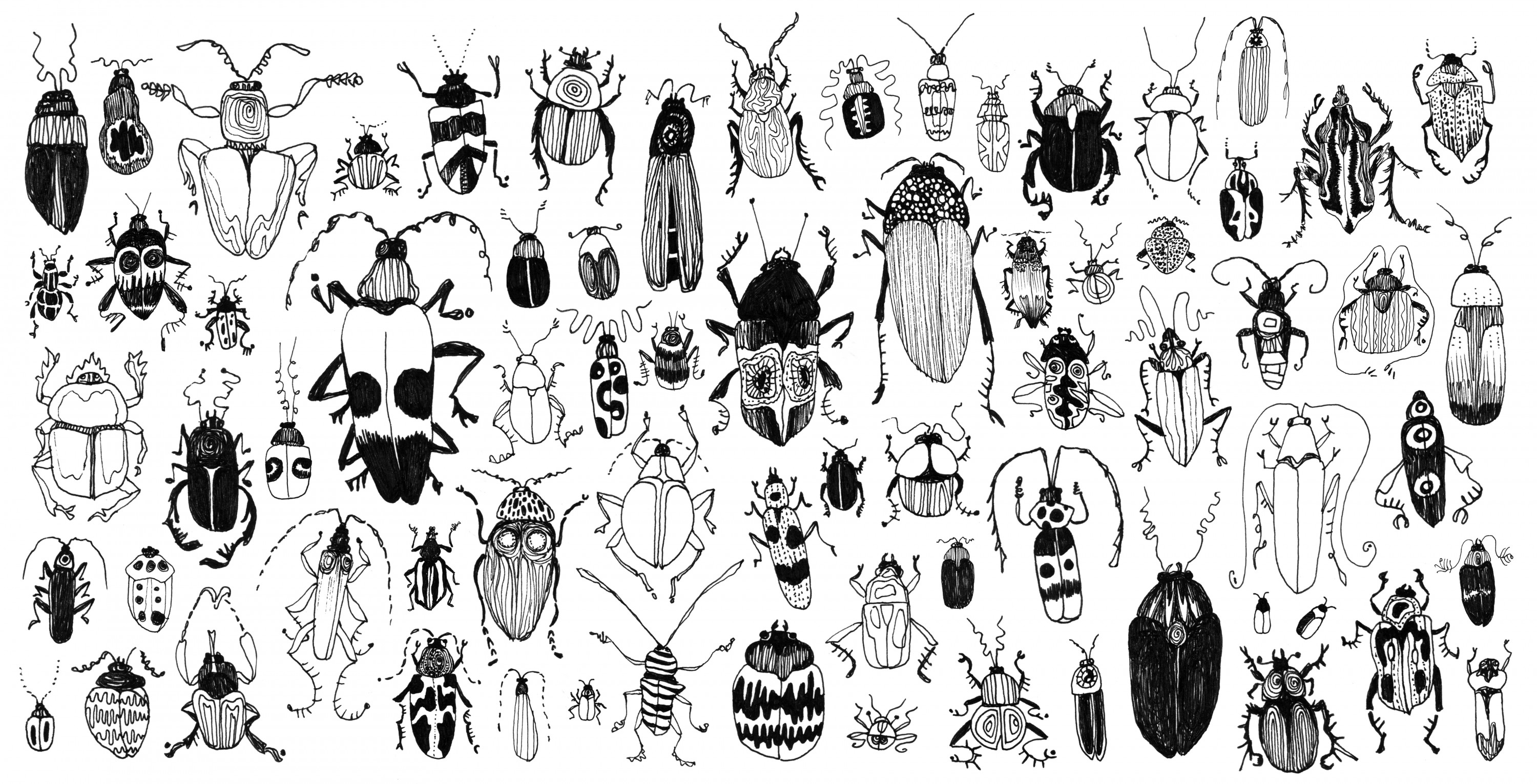 Beetles are the most diverse group of organisms on Earth, and account for one quarter of all known species of plants and animals. There are more kinds of beetles than all plants.