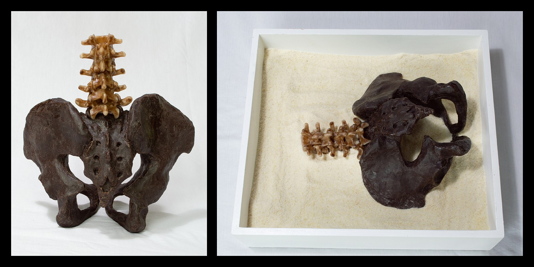 A photograph of a hand sculpted pelvis accompanied by the five lumbar vertebrae. Another photograph shows a hand sculpted femur, this bone connects to the acetabulum of the pelvis.
