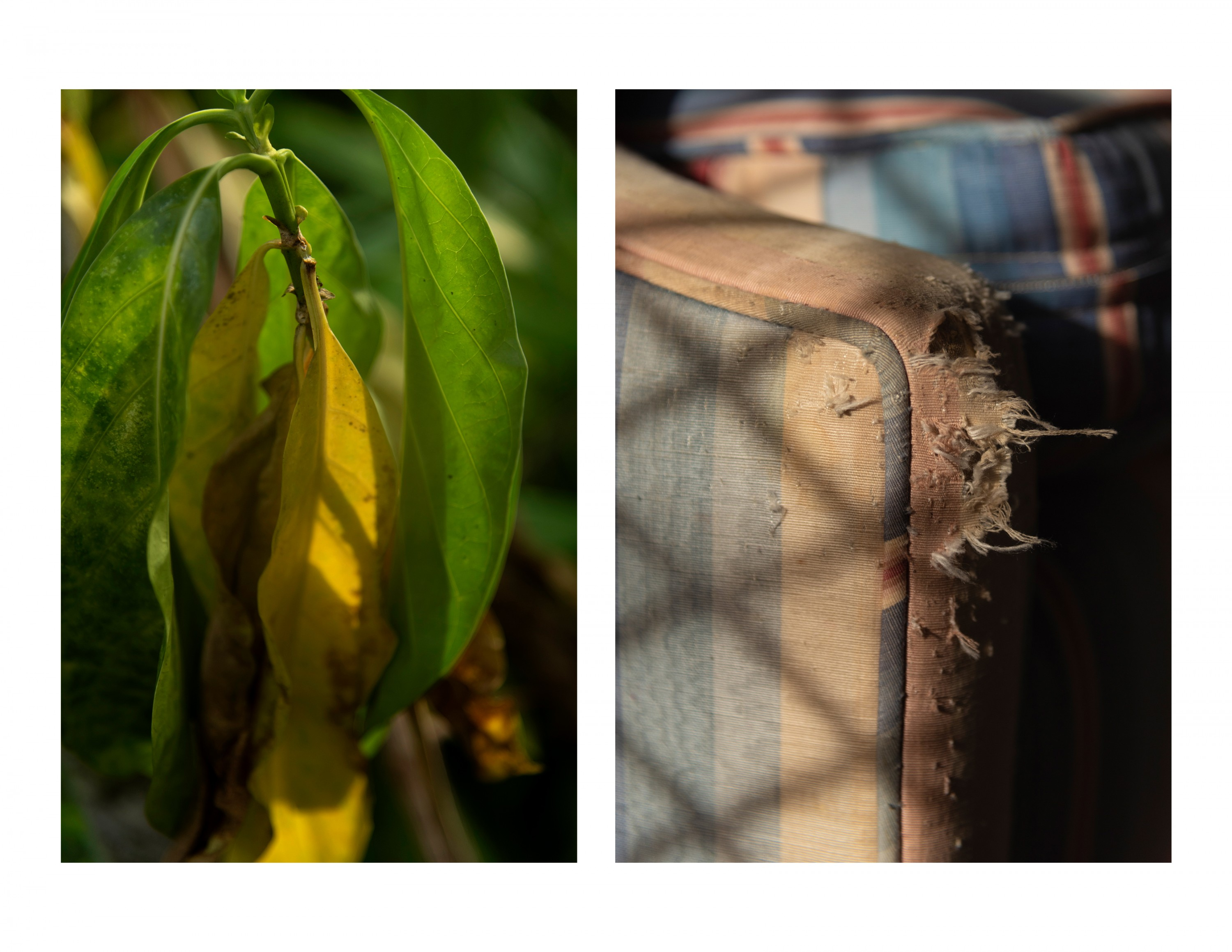 Two photographs next to each other, one on the left has leaves in sunshine and the one on the right is a corner of a couch that is scuffed up