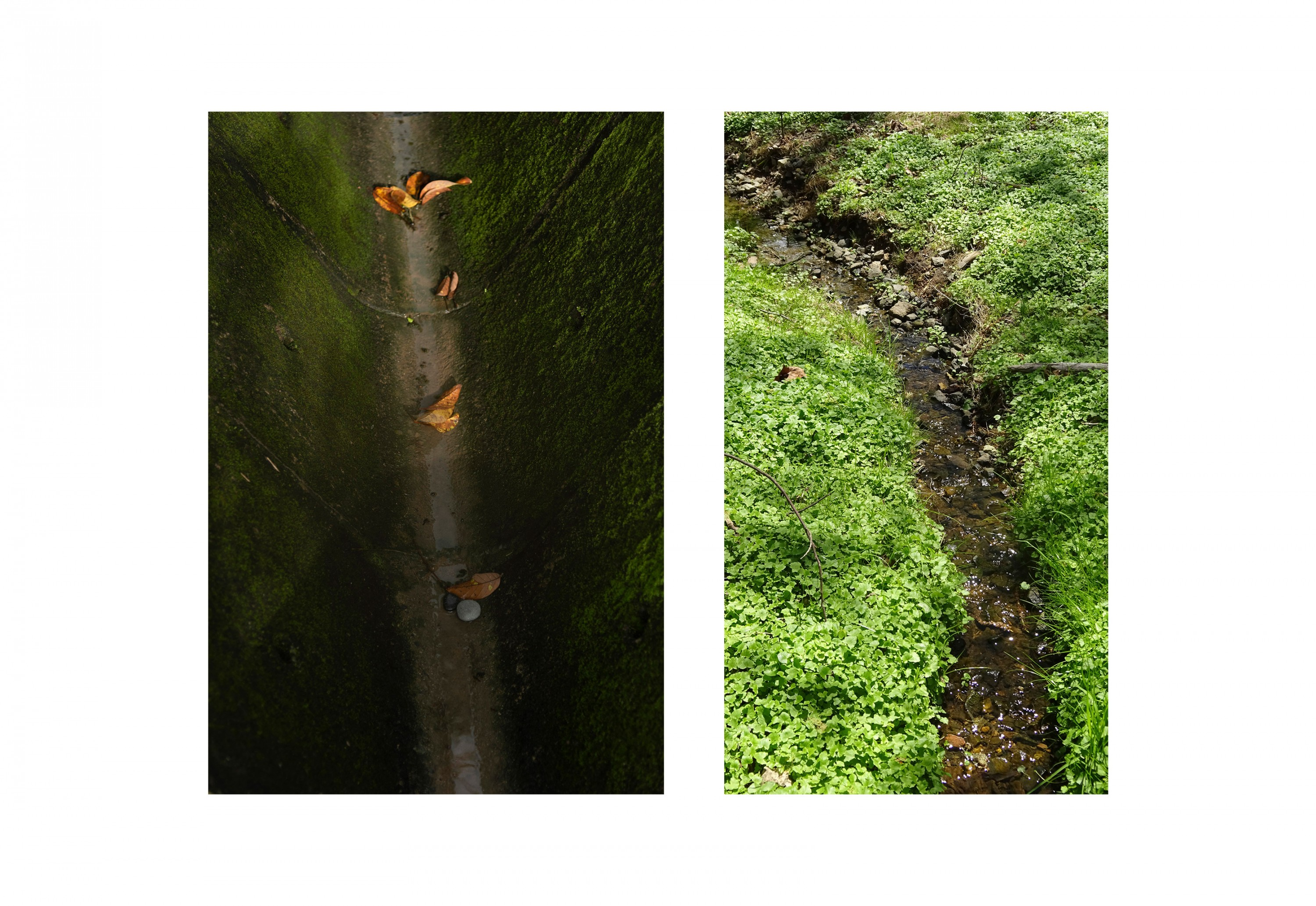 Two photographs next to each other, one on the left is a green gutter with leaves the one of the right is a stream with plants around it