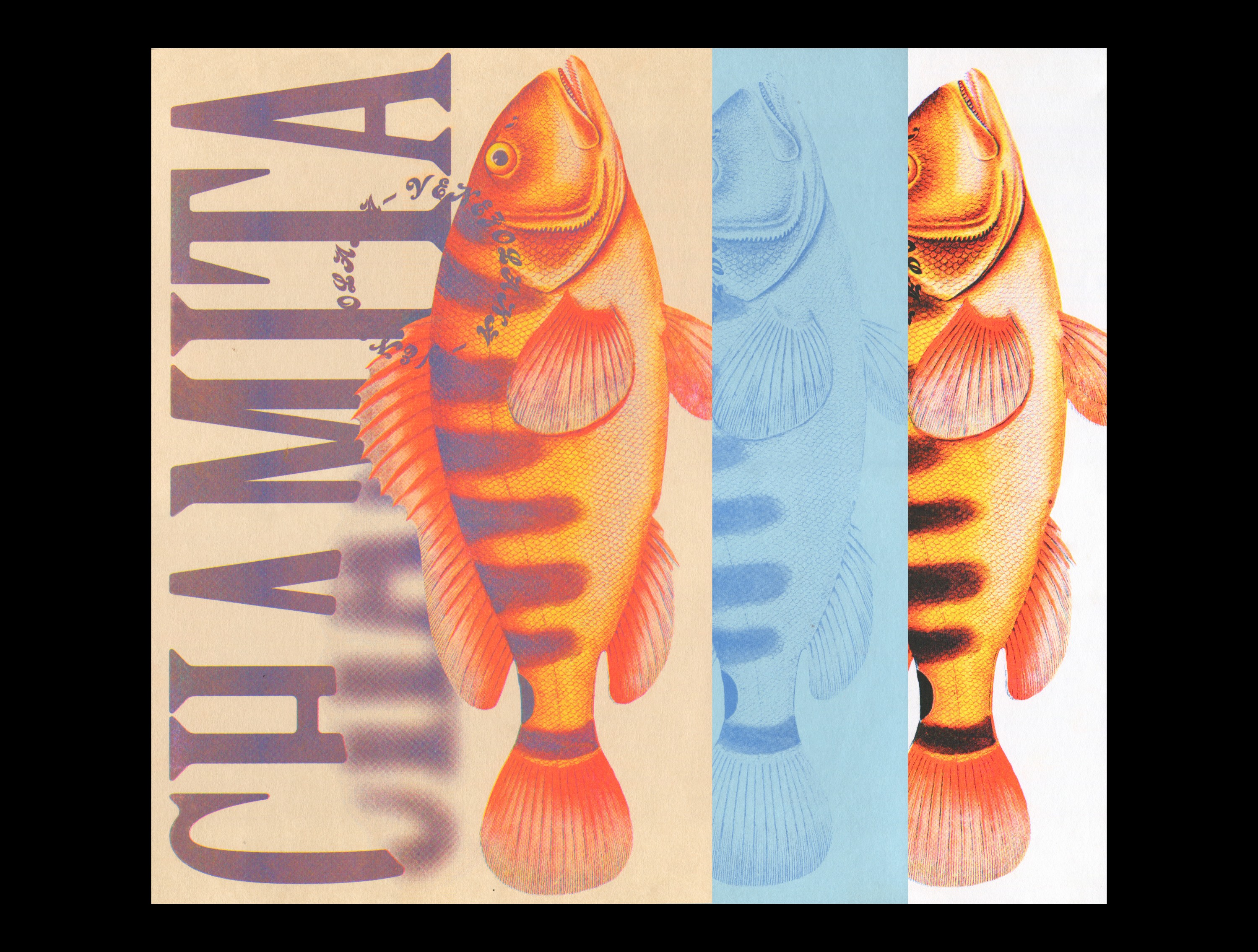 """3 posters of the word """"Chamita"""" on the left side, vertically laid out"""" and a highly detailed illustration of fish on the right, sitting over the words on the left. The bottom part of the C, H, and A letters in the word are blurred. The post"""