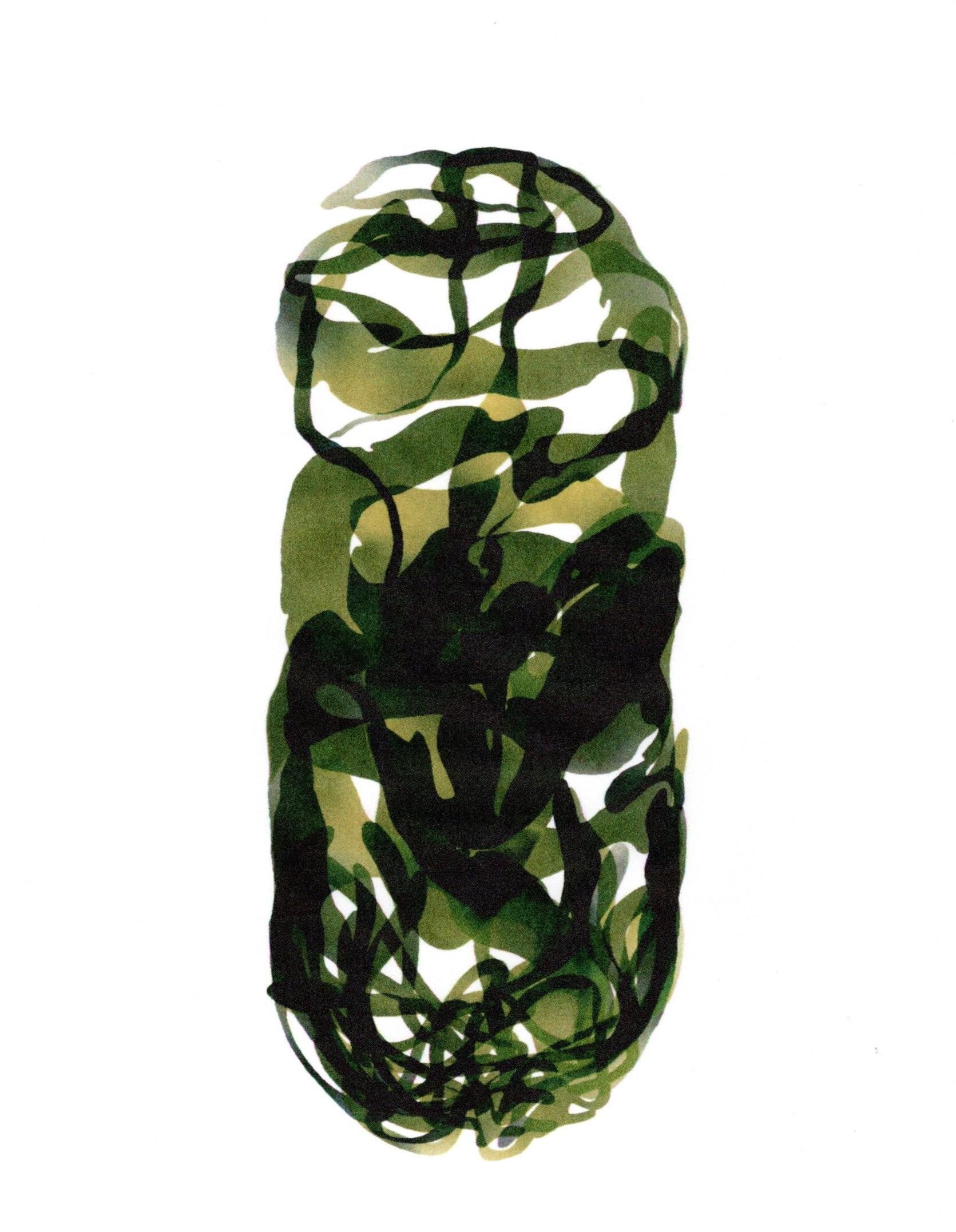 The imagery depicts marine kelp that is confined to the shape of a capsule, overlapping and intertwined with itself.