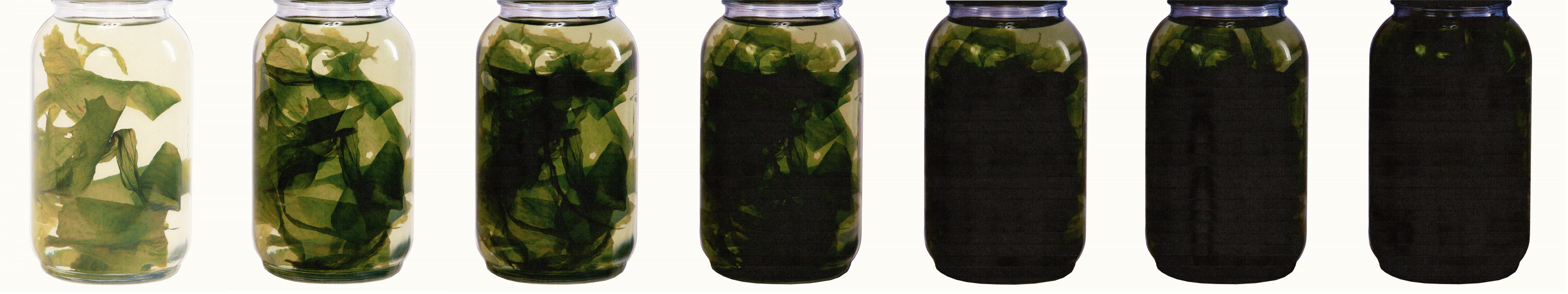 The imagery depicts consecutive jars containing wakame seaweed. Each iteration has an additional layer printed overtop.