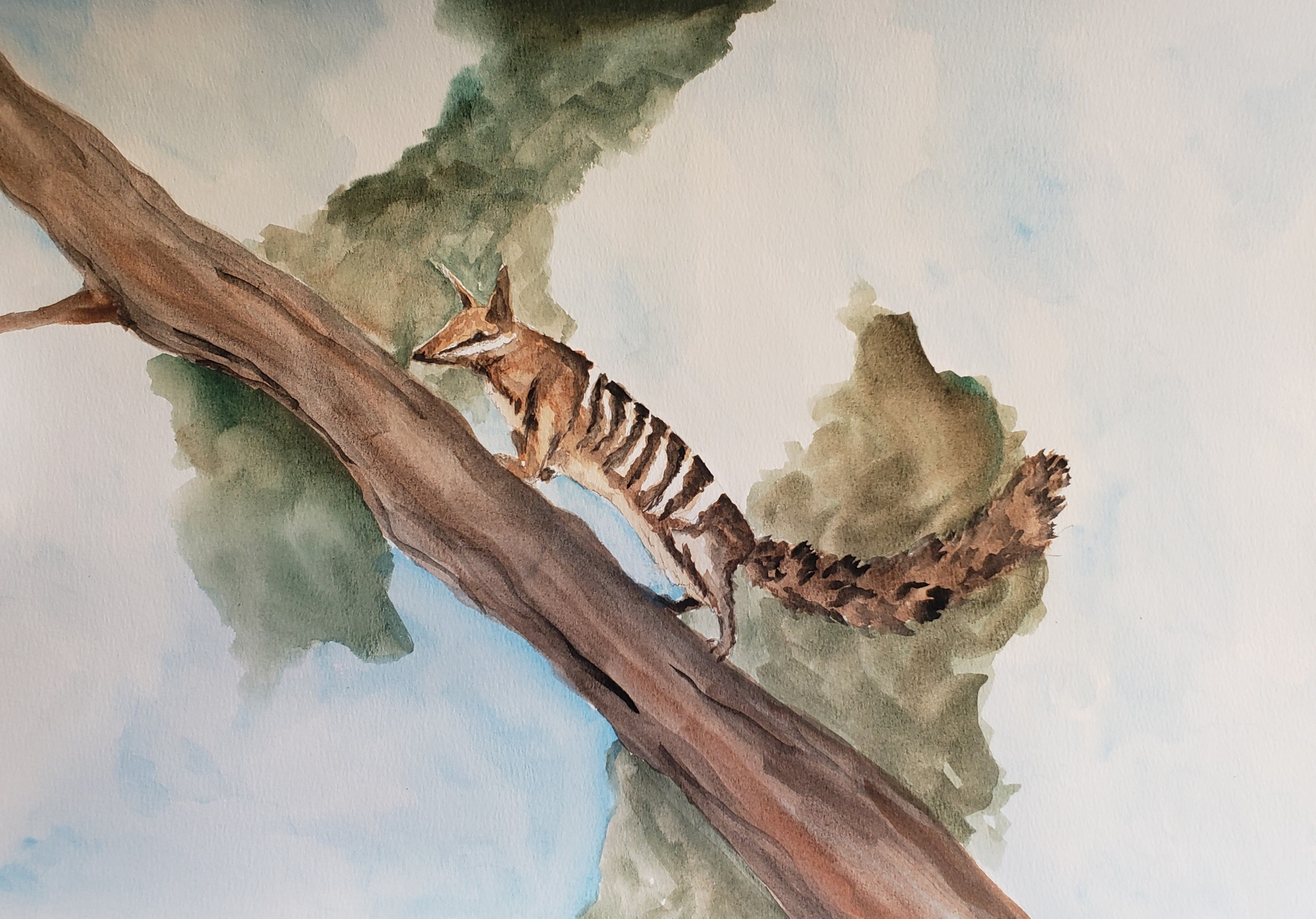 A numbat, an animal in Australia, climbing up a tree surrounded in blue sky, white clouds, and green shrub around it.