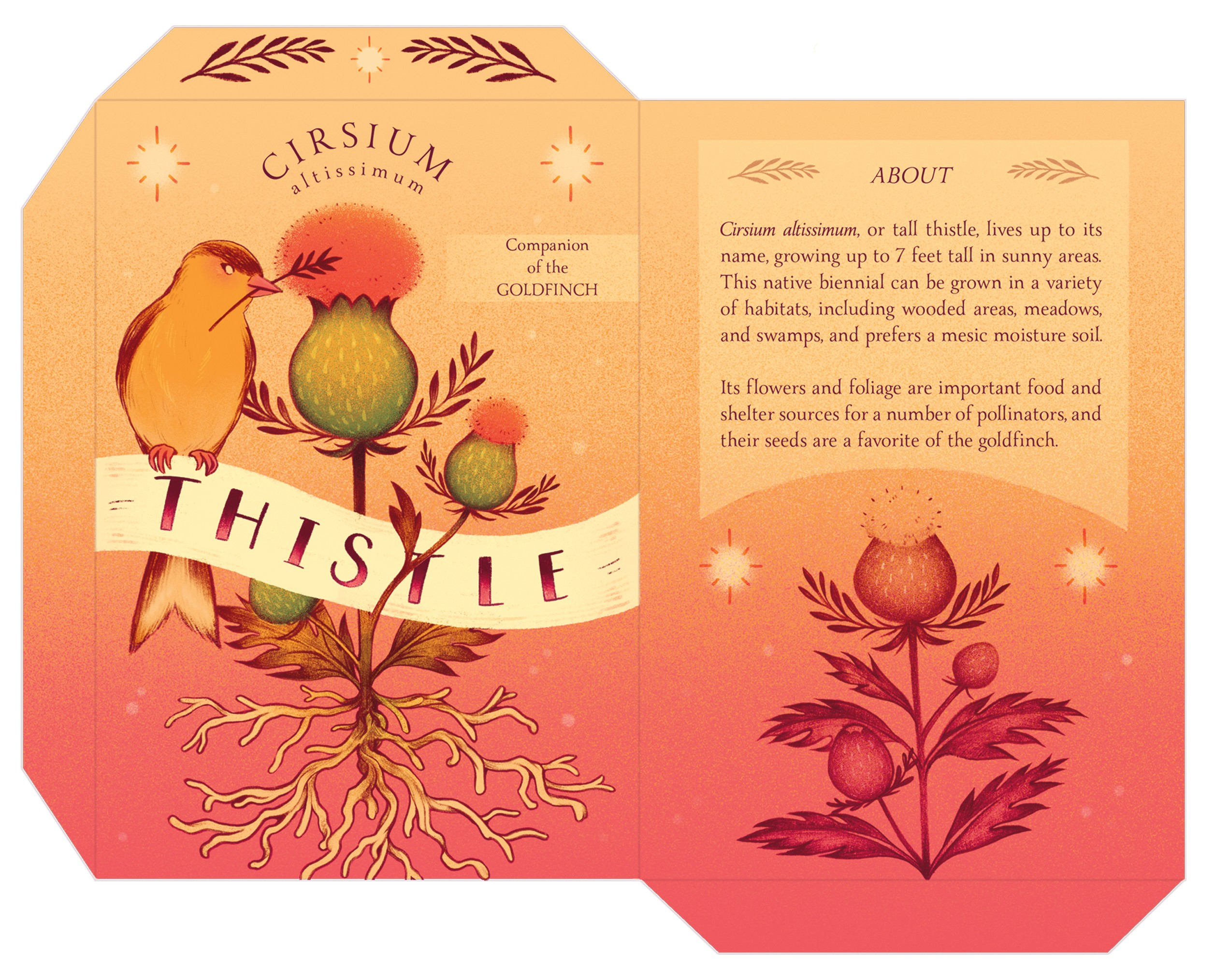 "A mock-up for a seed packet design featuring tall thistle and a goldfinch. The goldfinch is sitting upon the label that says ""Thistle"" with the plant situated behind it."