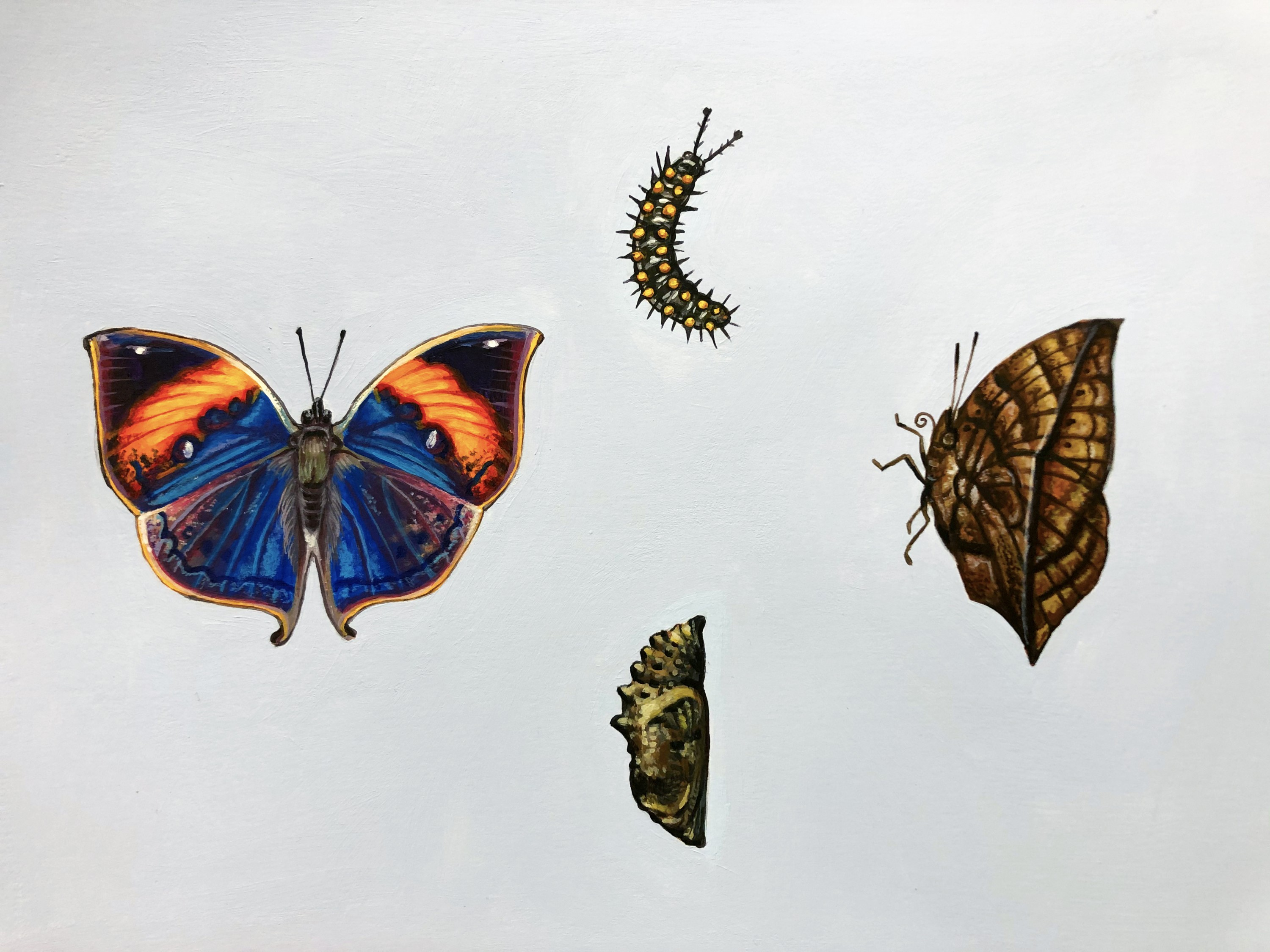 Rectangular acrylic painting of three of the life stages of the Dead Leaf Butterfly arranged on a pastel blue-gray background. The brightly colored blue and orange butterfly has its wings open to the left, the spiky yellow and black caterpillar is to the