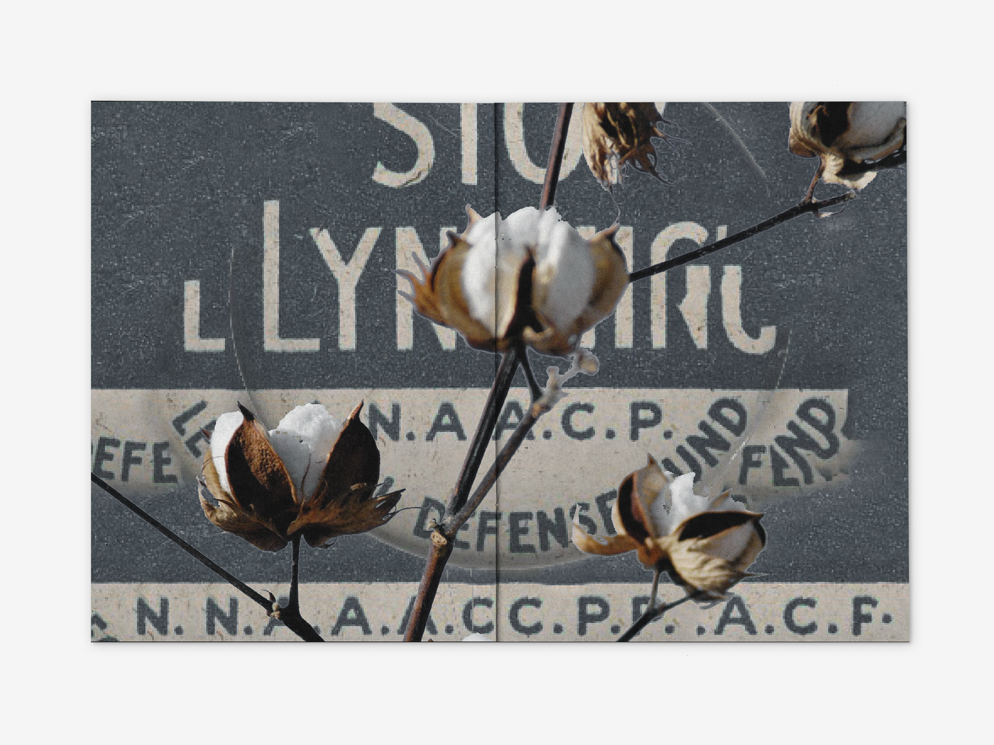Collage using imagery of a stop lynching button from the NAACP LDF and cotton plant.