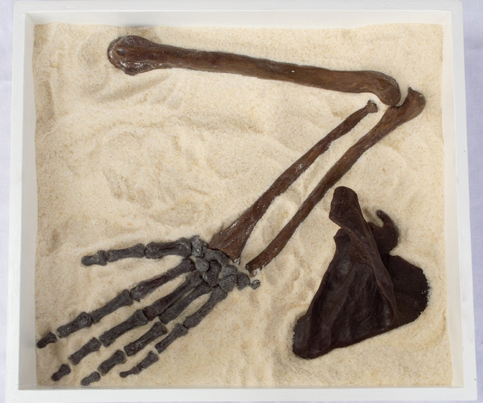 A photograph of a hand-sculpted skeletal arm lays in the sand. Each bone is articulated from the humerus (upper arm), radius and ulna (forearm), scapula (shoulder blade), and the carpals, metacarpals, and phalanges (hand bones).