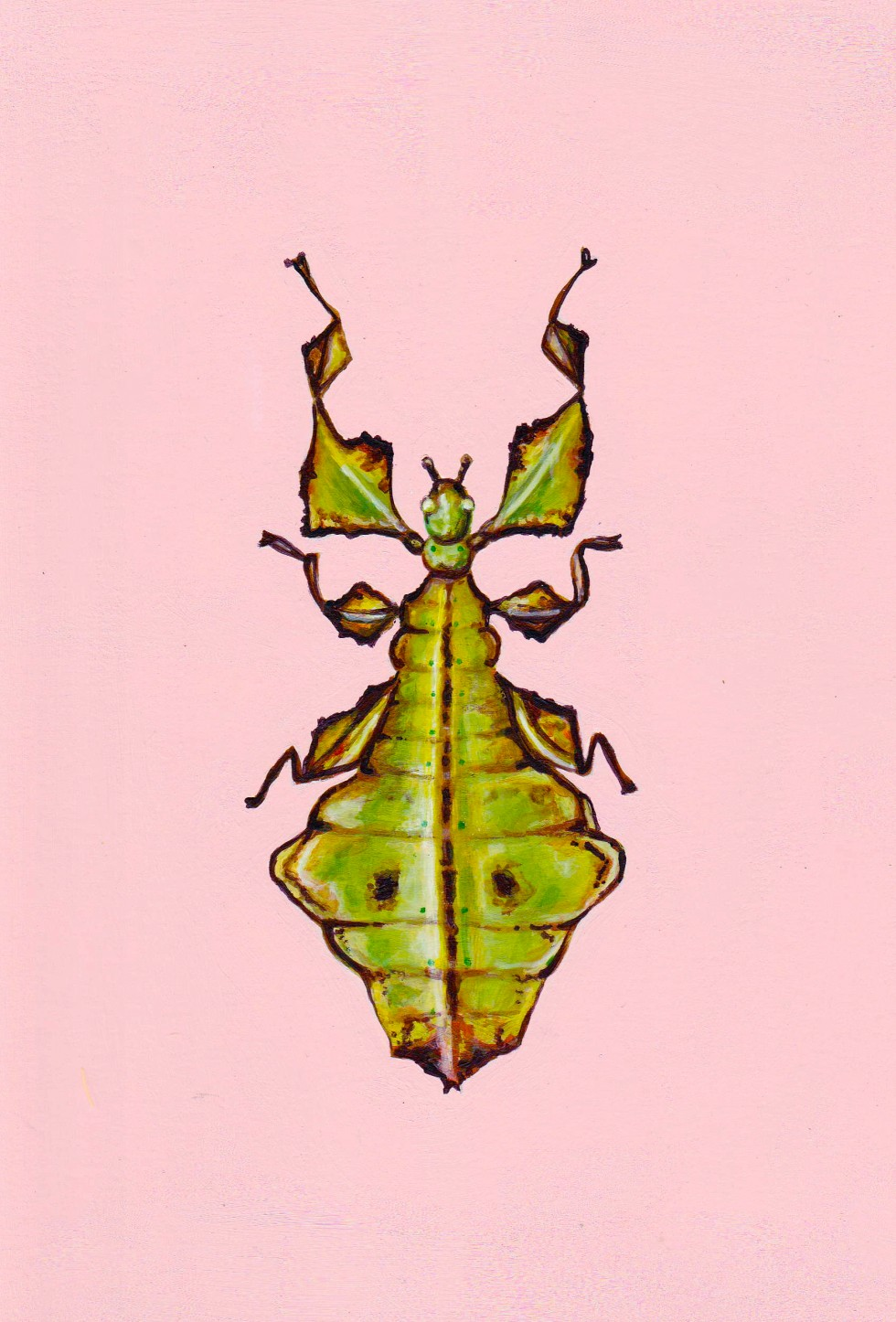 Rectangular acrylic painting of a lime green Giant Malaysian leaf insect on a bubblegum pink contrasting background.