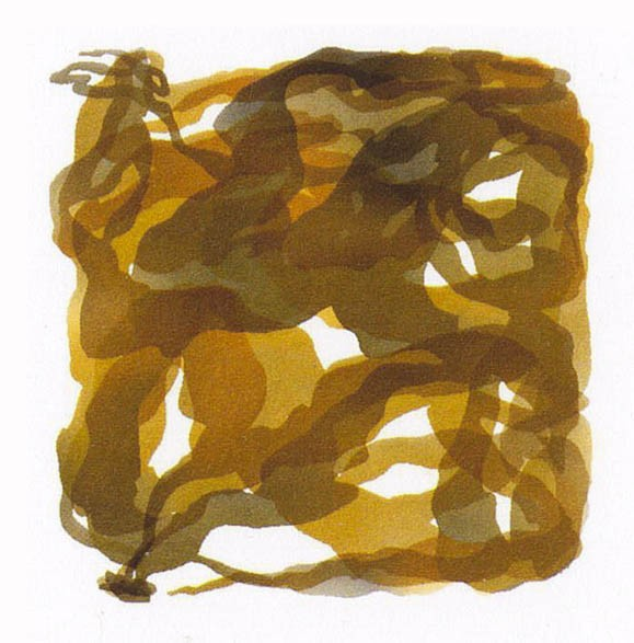 The imagery depicts golden sugar kelp, confined to a small square.
