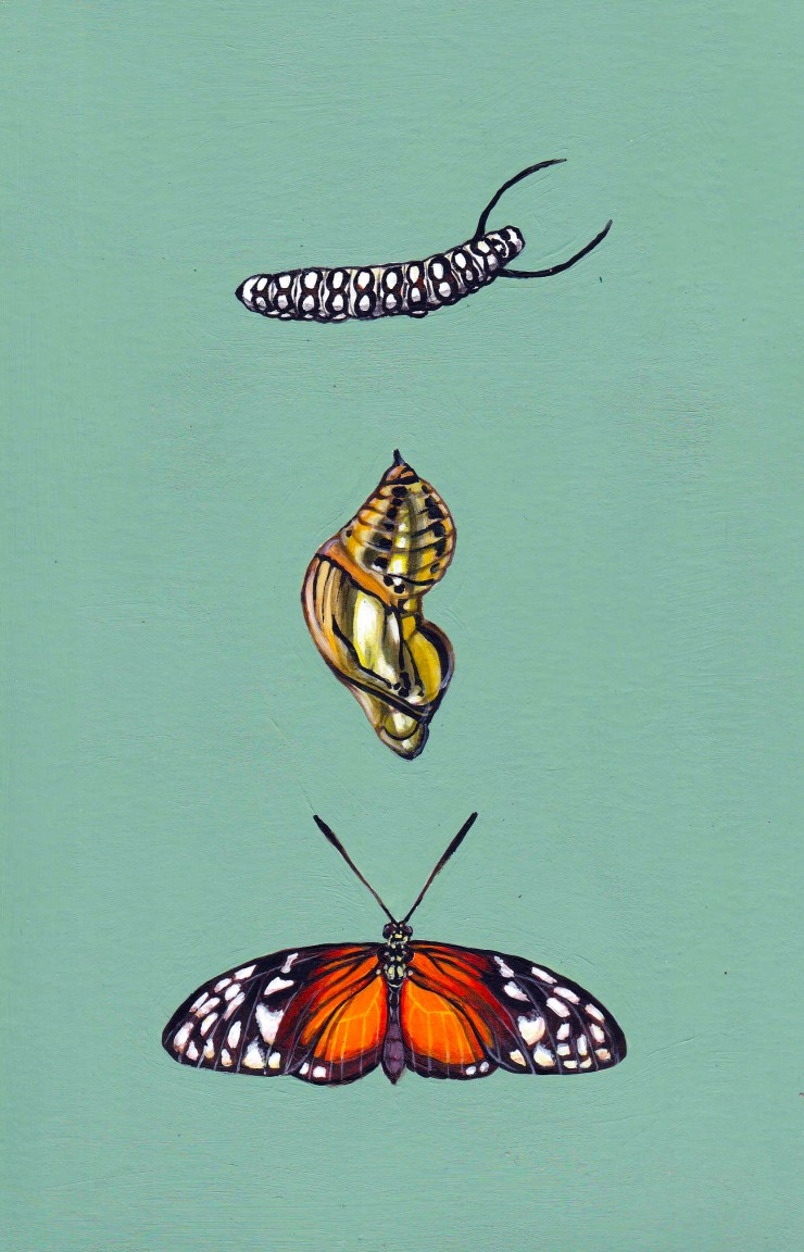 Rectangular acrylic painting of three of the life stages of a Harmonia Tigerwing Butterfly arranged in a row from top to bottom on a sage green background. At the top is the black and white striped caterpillar, the middle is the highly reflective golden c