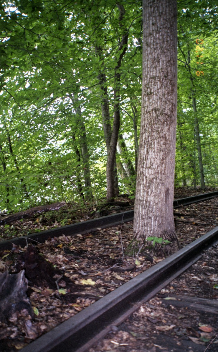 Risher_Wondrous (4 of 7)- This is a portrait orientated film photograph made in the forest during the day. In this photograph, the background is dense with green trees. In the foreground from the left, emerges abandoned railroad tracks that extend across