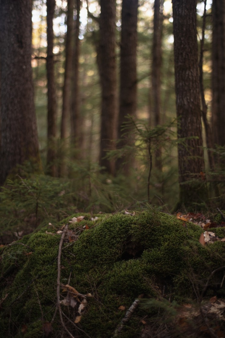 Risher_ Wondrous (6 of 7)- This is a portrait oriented digital photograph taken during the day in the forest. In this photograph, the background is full of blurry matured trees. As the focus becomes clearer, small saplings take shape in the midground. In