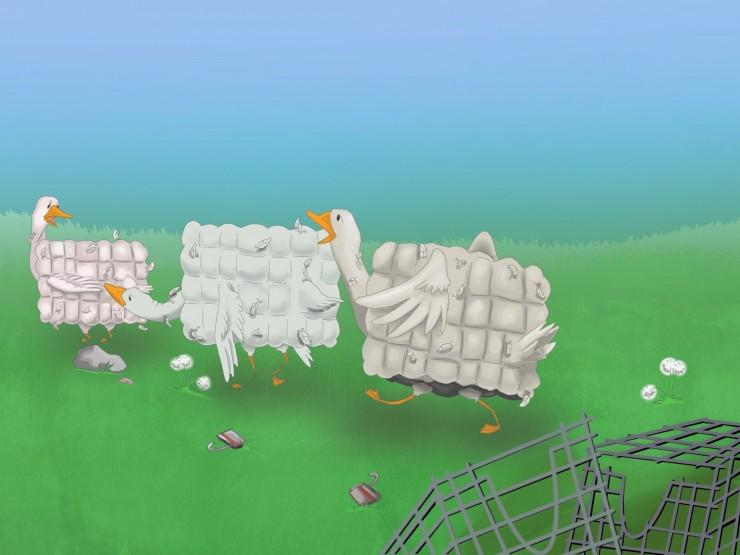 Geese with bodies shaped like the cages that they lived in for most of their lives finally break free and go on strike
