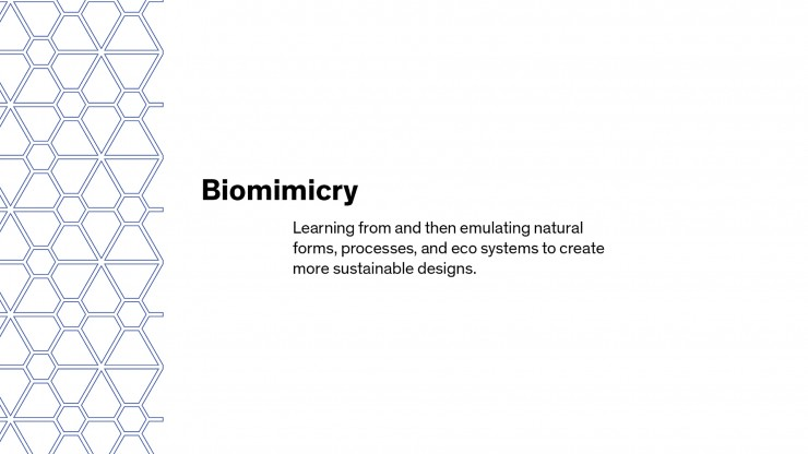 Biomimicry Thesis