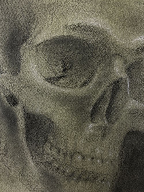 A charcoal and graphite drawing with white highlights on sap green toned paper of a skull, dimly lit at approximately three-quarters view.